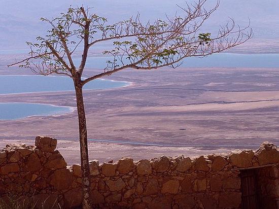 Экология земли Обетованной в разгар интифады
